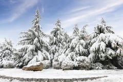 mot blå snow för sky för frostliggandeplats övervintrar trees Arkivbilder