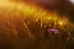 mot blå tusensköna blommar skyyellow Royaltyfria Foton