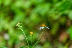 mot blå tusensköna blommar skyyellow Fotografering för Bildbyråer