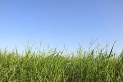 mot blågrässkyen Fotografering för Bildbyråer