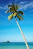 mot blå kokosnöt gömma i handflatan skyen Royaltyfria Bilder