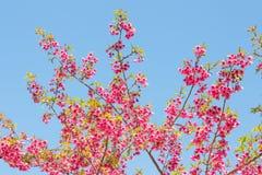 mot blommaskyen Arkivbild