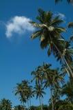 mot blue gömma i handflatan skytrees Royaltyfri Fotografi