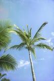 mot blue gömma i handflatan skytrees Arkivbilder