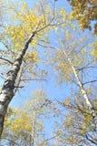 mot blue parts övre trees för sky Arkivbilder