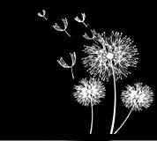 mot dark för maskros för tät kopia för blowsblue kärnar ur man skyavstånd upp vit wind Arkivfoton