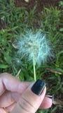 mot dark för maskros för tät kopia för blowsblue kärnar ur man skyavstånd upp vit wind Royaltyfri Foto