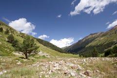 mot den blåa ensamma dalen för bergskytree Arkivfoton