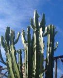 mot den blåa kaktusskyen Fotografering för Bildbyråer