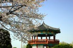 mot den blåa koreanska pavillionskyen royaltyfri bild