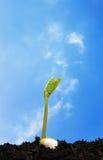 mot den blåa plantaskyen Arkivfoto
