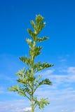 mot den blåa växtsagebrushskyen fotografering för bildbyråer