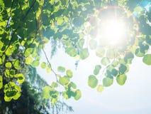 mot den gröna leavesskyen Arkivfoto