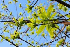 mot den gröna leavesskyen Arkivbild