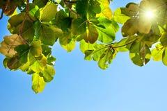 mot den gröna leavesskyen Royaltyfri Foto