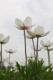 mot den molniga blommaskyfjädern Arkivfoton