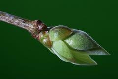 mot den nya lilan för livstid för bakgrundsknoppgreen Royaltyfri Bild