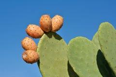 mot den prickly skyen för blåa pears Royaltyfria Bilder