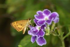 Mot en bloem Stock Afbeelding