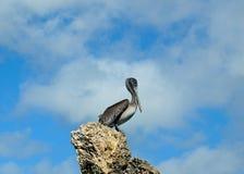 mot för pelikanrock för blå gray skyen Royaltyfria Bilder