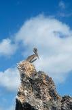 mot för pelikanrock för blå gray skyen Arkivfoton
