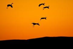 mot fåglar silhouetted sky Arkivfoton