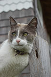 mot gnidning för katthuvudstolpe Royaltyfria Foton