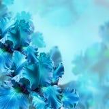 mot gräs irises green pink royaltyfria bilder