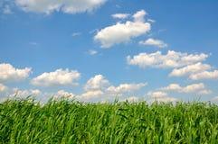 mot grässkyen Arkivbilder