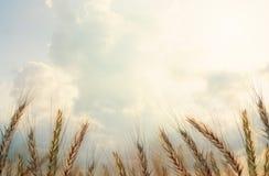 mot härlig close clouds den mogna selektiva skyen för örafokusen upp vete Selektivt fokusera royaltyfri foto
