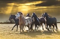 mot härlig hästskystampede royaltyfria bilder