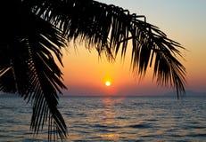 mot kokosnöt gömma i handflatan den silhouetted soluppgångtreen Royaltyfri Fotografi