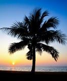 mot kokosnöt gömma i handflatan den silhouetted soluppgångtreen Arkivbilder