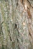 Mot op een boomstam Stock Afbeelding