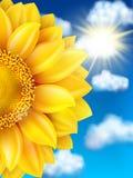 mot solrosen för blå sky 10 eps Royaltyfri Foto