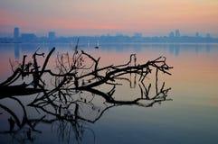 mot strandkranjisingapore horisont Fotografering för Bildbyråer