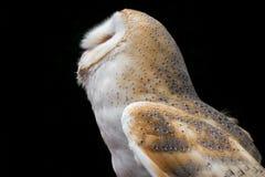 mot svart seende owl för bakgrundsladugård upp Royaltyfri Foto