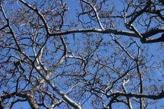 mot tree för bakgrundsbluefilialer Arkivbilder