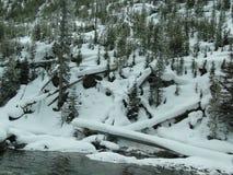 mot vända för trees för bergsky stormigt Royaltyfria Bilder