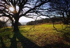 mot vibrerande vinter för oisolerad enkel solnedgångtree royaltyfri fotografi