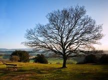 mot vibrerande vinter för oisolerad enkel solnedgångtree royaltyfria foton