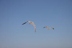 mot wind Arkivfoto