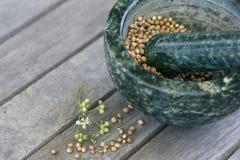 Motar vert et pilon avec la coriandre sur une table Photos stock