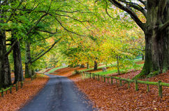 Mote Park in Autumn. Avenue of trees in Mote Park in Autumn, with fallen leaves on ground Stock Photography