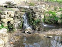 Mote Park waterfall Stock Photos