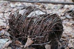 Motek ośniedziały stary drut kolczasty kłama w lesie na suchych liściach Obrazy Royalty Free