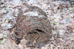 Motek ośniedziały stary drut kolczasty kłama w lesie na suchych liściach Obrazy Stock