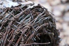Motek ośniedziały stary drut kolczasty kłama w lesie na suchych liściach Fotografia Royalty Free