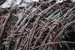 Motek ośniedziały stary drut kolczasty kłama w lesie na suchych liściach Zdjęcie Royalty Free