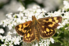 Moth. The moth on a flower, is photographed by close up Stock Photo